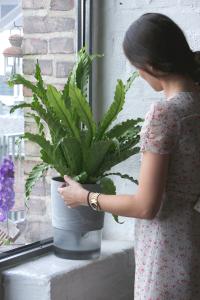 Humidifiing Flower Pot